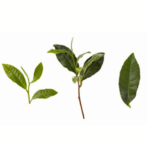 green-tea-leaves-400x400